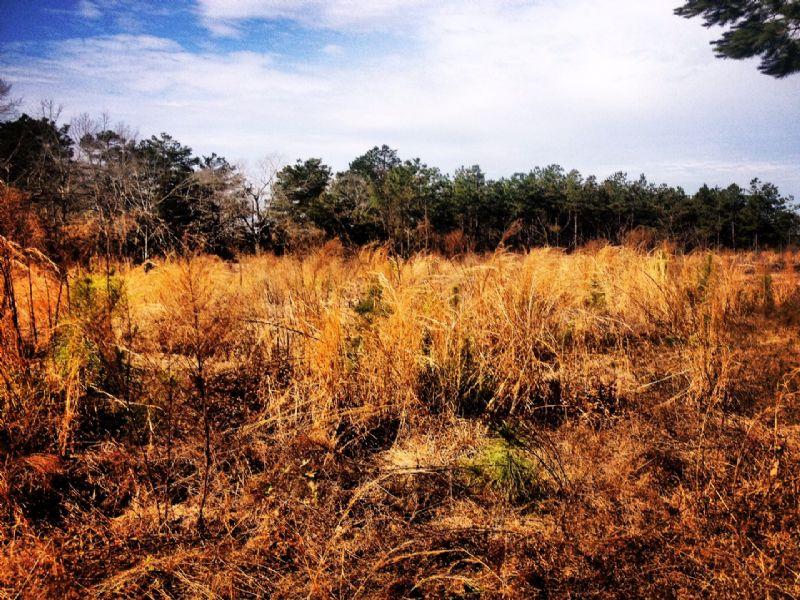 7 Acres : Saint Matthews : Calhoun County : South Carolina