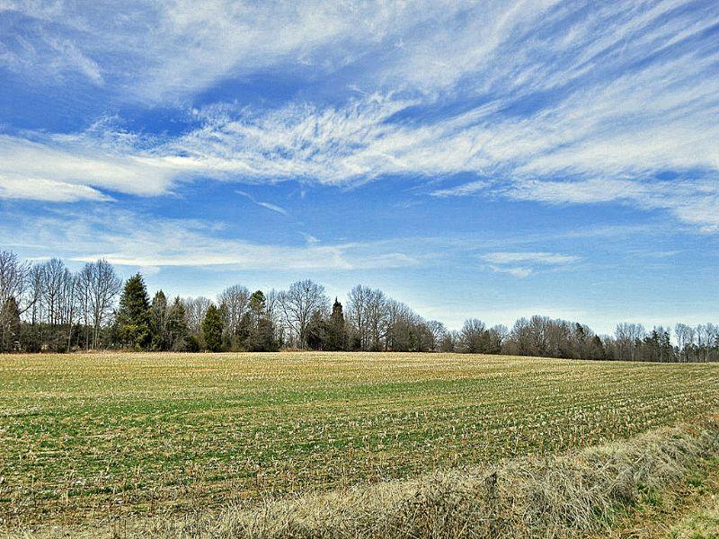 11 Acre Mini-farm : Gaffney : Cherokee County : South Carolina