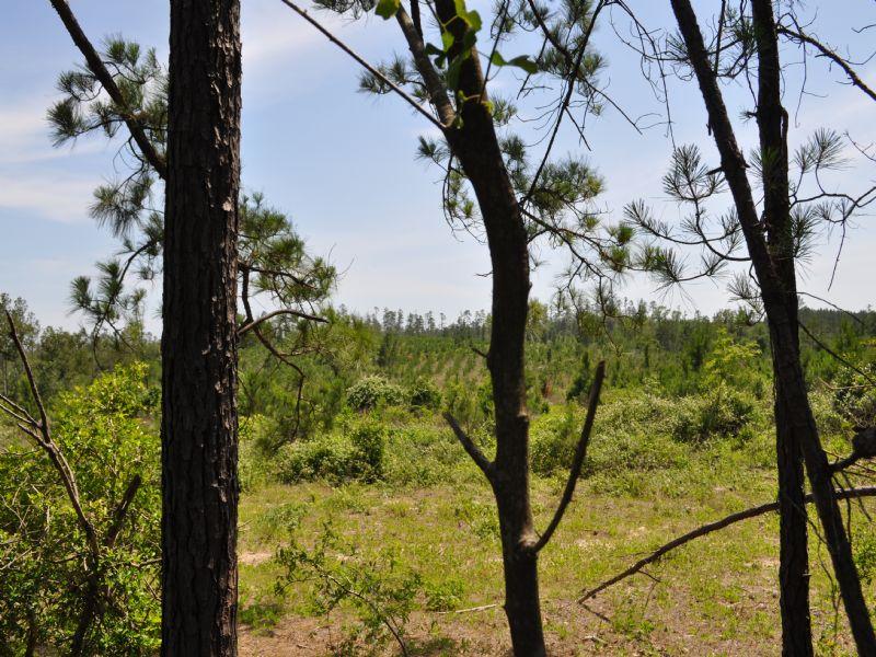 85 Ac- Scales Ranch Rd. : Huntsville : Walker County : Texas