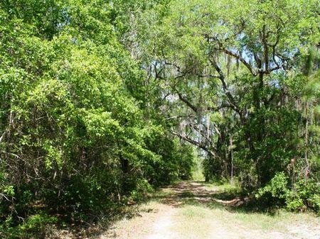 Gum Creek Preserve : Greenville : Madison County : Florida