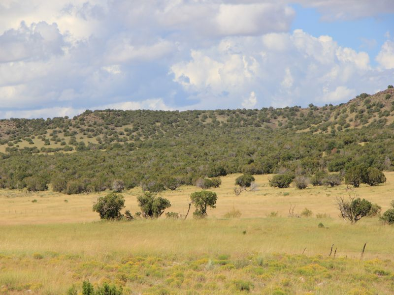 Woodland Valley Ranch : St. Johns : Apache County : Arizona