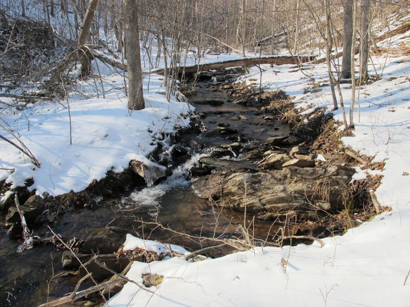 713.27 Acres In 7 Tracts With Pond : Winchester : Frederick County : Virginia