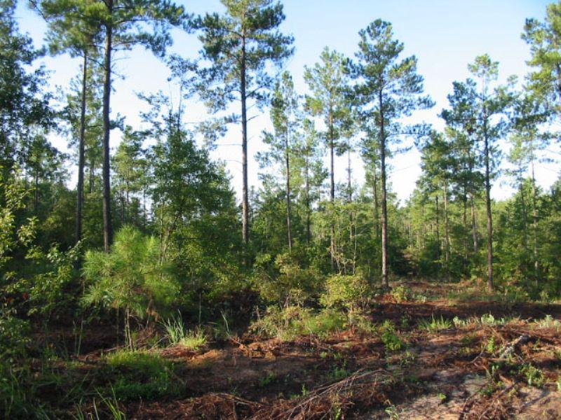 Reduced 68.25 Acres Planted Pines : Hephzibah : Burke County : Georgia