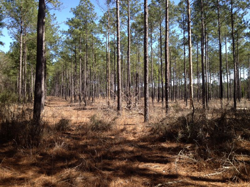 23.67 Acres Wooded / Residential : Mobile : Mobile County : Alabama