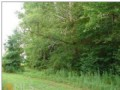 Must See, 56 Beautiful Acres