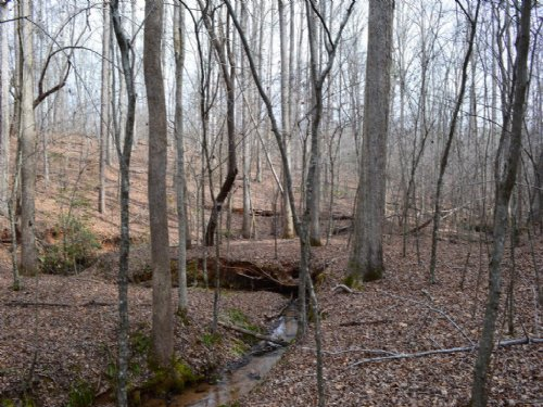 62 Acres With Creek Frontage : Campobello : Spartanburg County : South Carolina