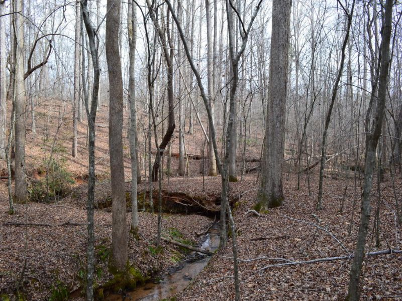 62 Acres With Creek Frontage : Campobello : Spartanburg County : South Carolina
