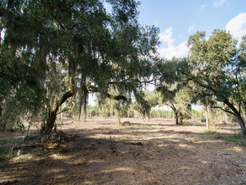 Rocky Ford Tree Farm : Madison : Florida