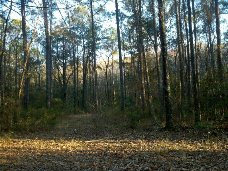 Perfect Small Hunting Tract : Woodbine : Camden County : Georgia