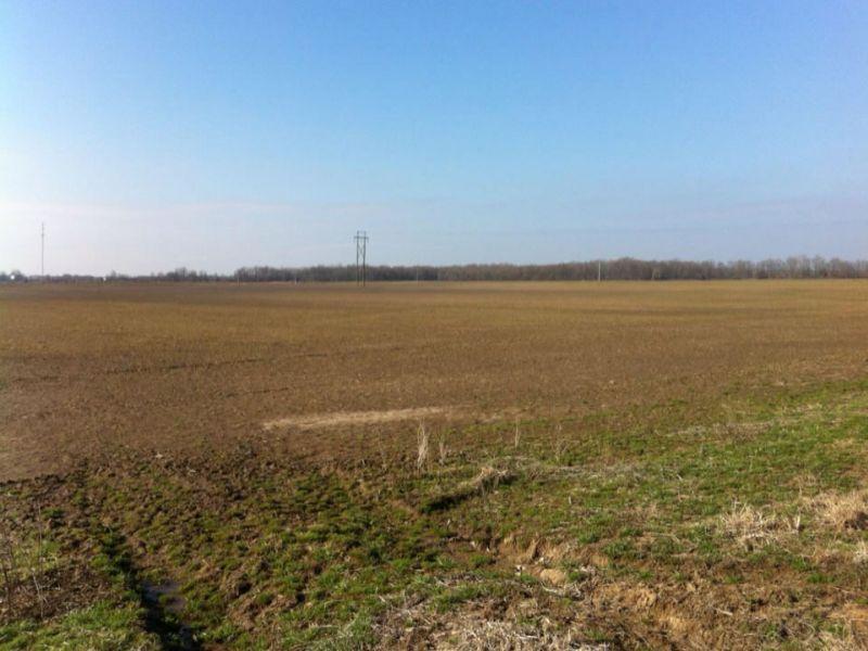 299 Acre Duck And Rice Farm : Brinkley : Monroe County : Arkansas
