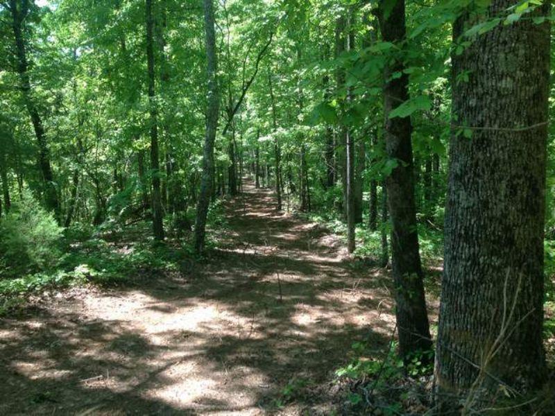 76+/- Acres On Hatchett Creek : Coleta Valley : Clay County : Alabama