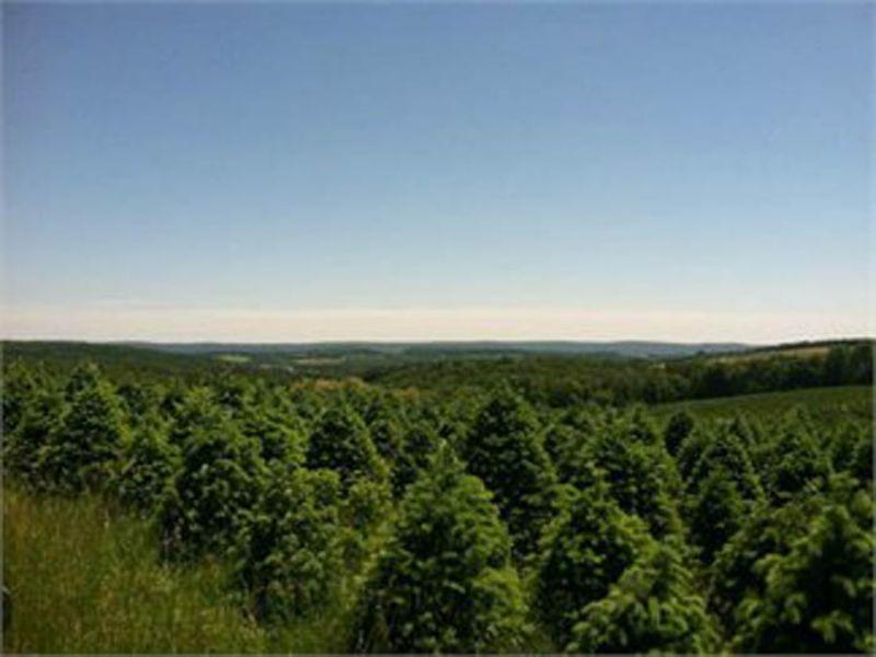 190 +/- Acres Land Auction : Benton : Columbia County : Pennsylvania