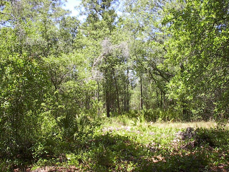 Nice 5 Acre High And Dry : Brooksville : Hernando County : Florida