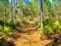Long Pines