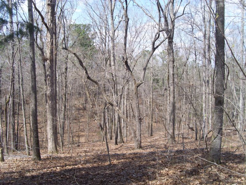 Holloway Road Tract : North Of Camp Hill : Tallapoosa County : Alabama