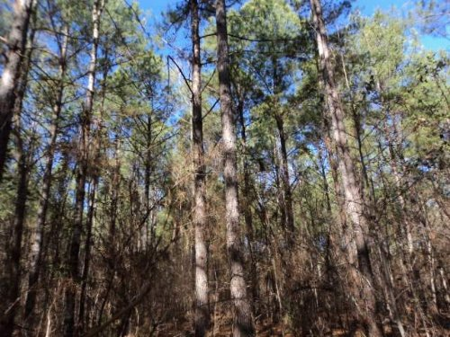 40+/- Acres Timber : Jemison : Chilton County : Alabama