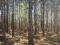 Forest Lane Tract