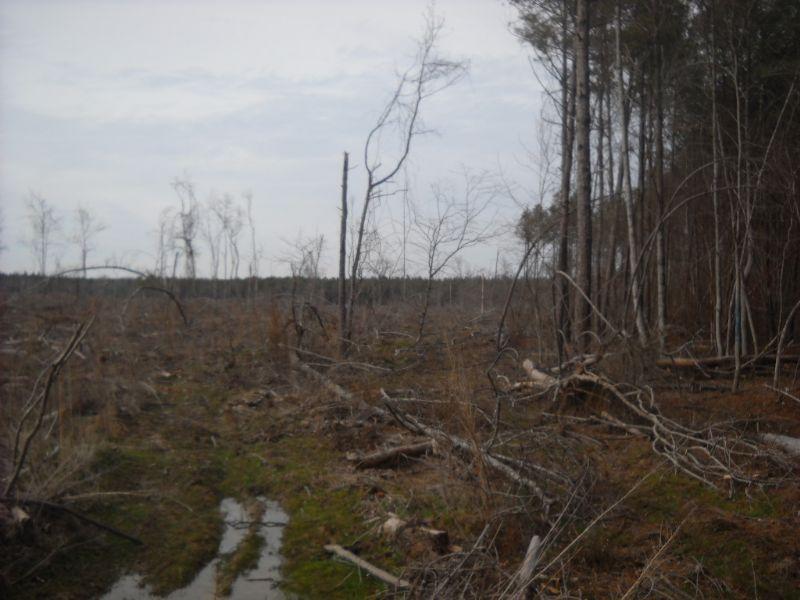 22067hb042 Brewer Creek : Bastrop : Morehouse Parish : Louisiana