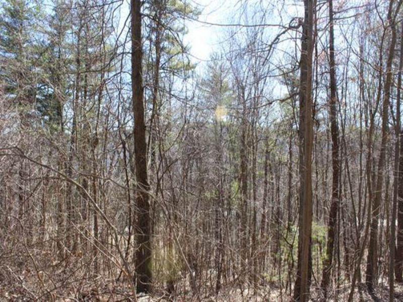 191 +/- Acres Mountain Land Auction : Shamokin : Northumberland County : Pennsylvania