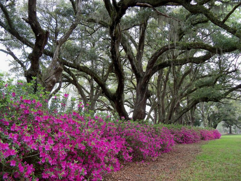 Battlefield Plantation : Ravenel : Charleston County : South Carolina