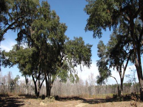 Hyde Park Oaks Tract : Ravenel : Charleston County : South Carolina
