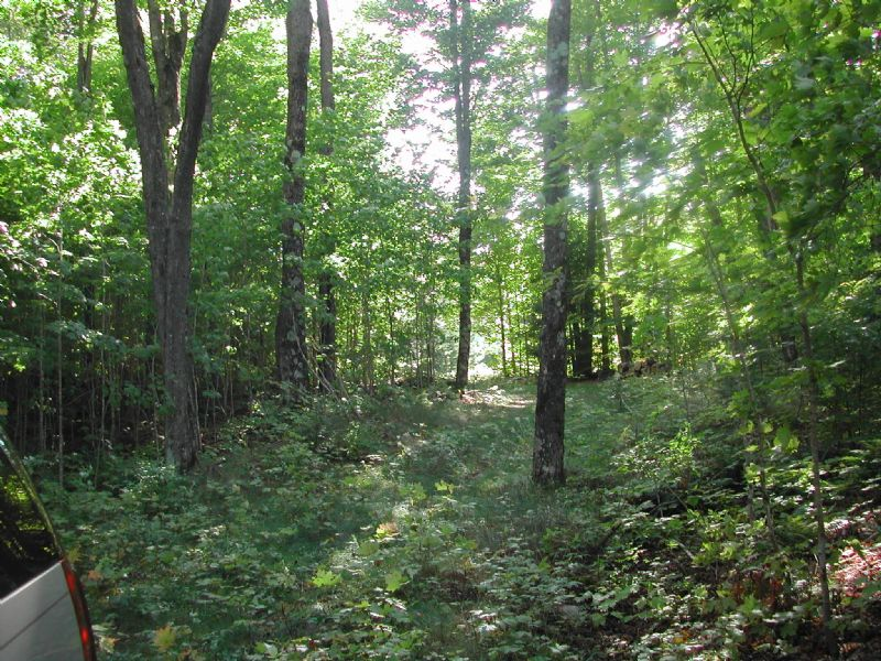 Lot 69 Powder Horn Rd : Presque Isle : Vilas County : Wisconsin