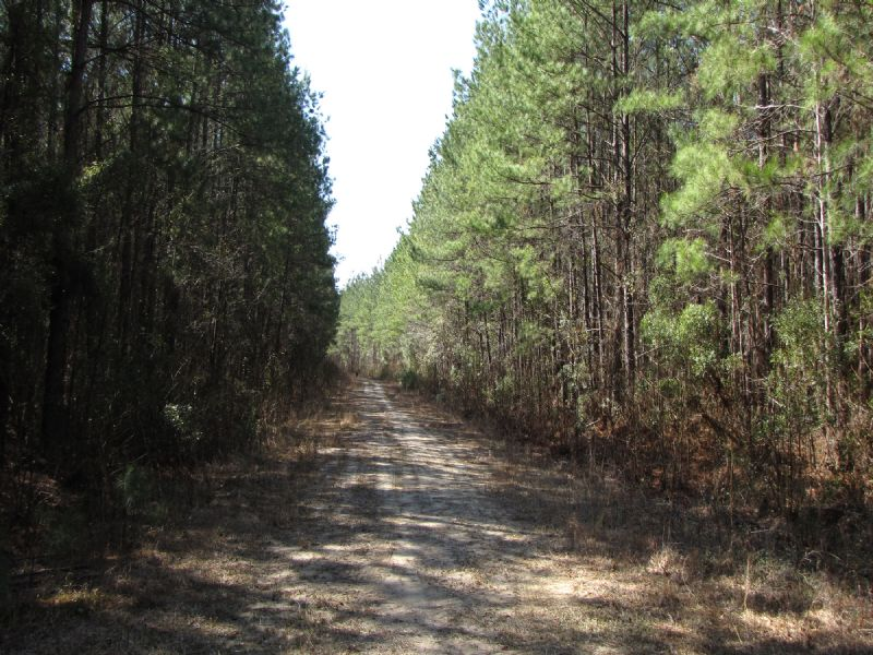River Bend Tract : Ridgeville : Dorchester County : South Carolina
