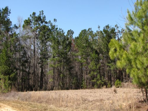 Beech Hill 56 : Givhans : Dorchester County : South Carolina