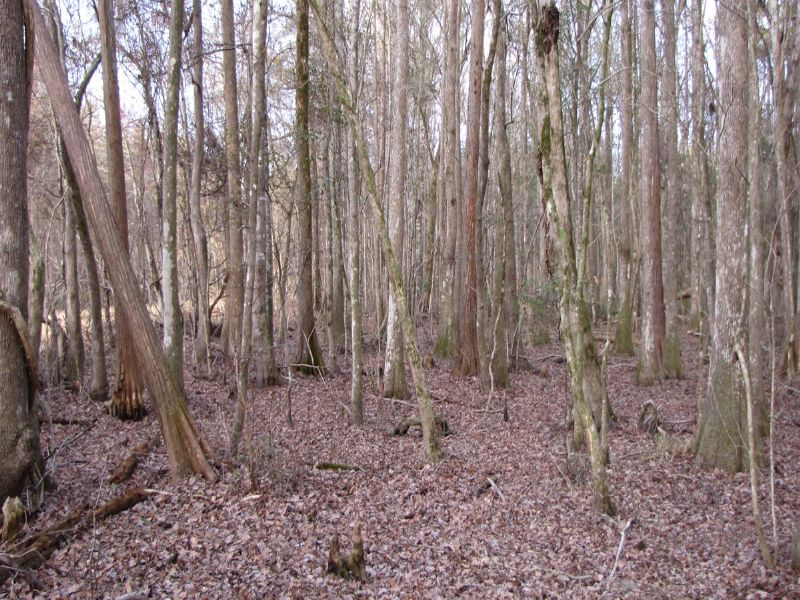 Carroll Tract : Summerville : Dorchester County : South Carolina