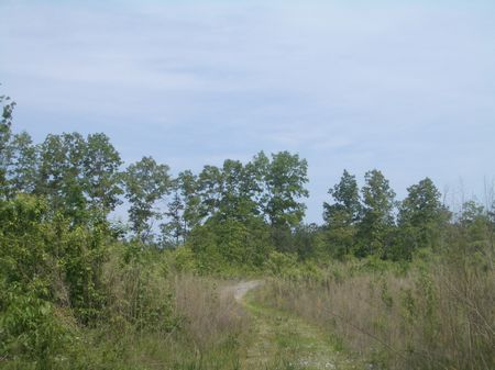 308 Acres On Pleasant Valley Road : Adairsville : Bartow County : Georgia