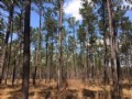 Ogeechee River Timber Tract