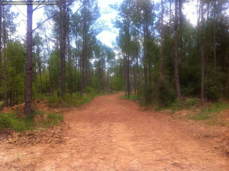 124 Acre Opportunity : Courtland : Panola County : Mississippi