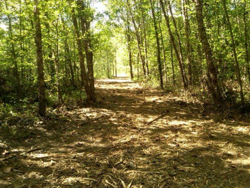Wooded Escape : Buckingham : Buckingham County : Virginia