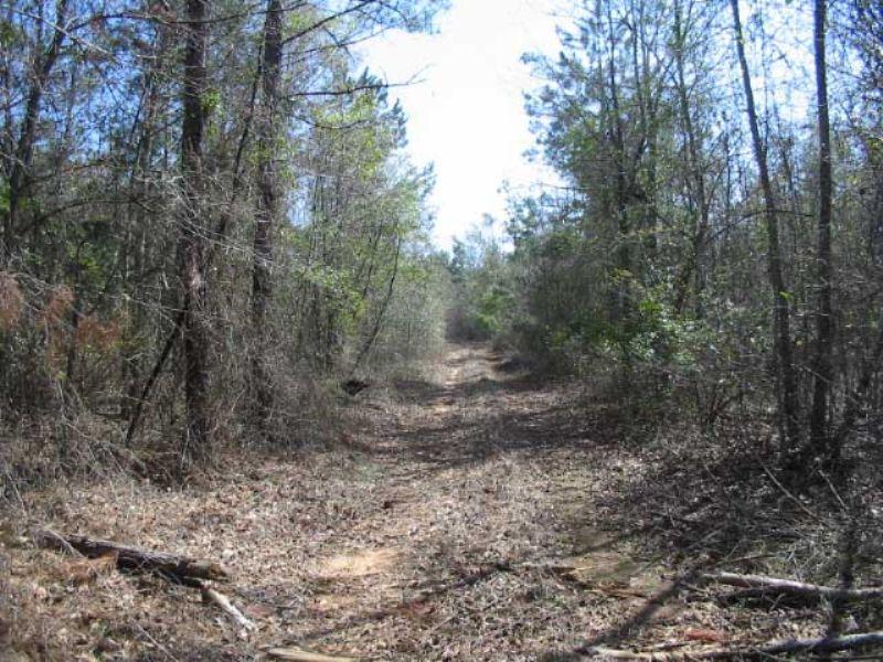 297 Acres Wooded, Creek : Bartow : Jefferson County : Georgia