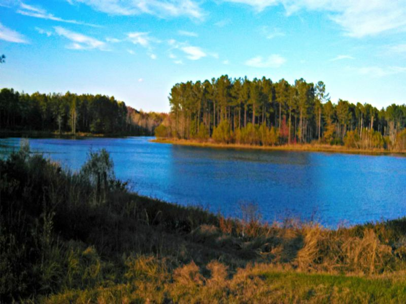 1153 Acres Double D Farm : Hiltonia : Screven County : Georgia