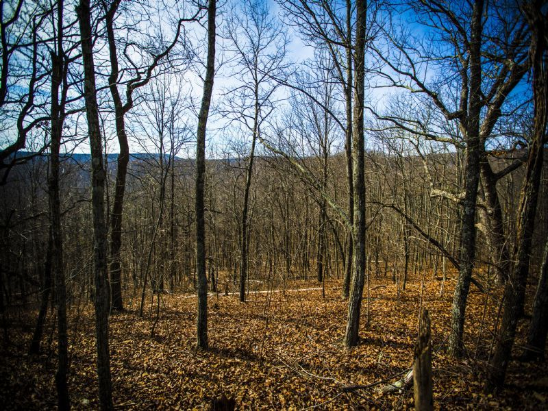 Bledsoe: Large Unrestricted Acreage : Spring City : Bledsoe County : Tennessee
