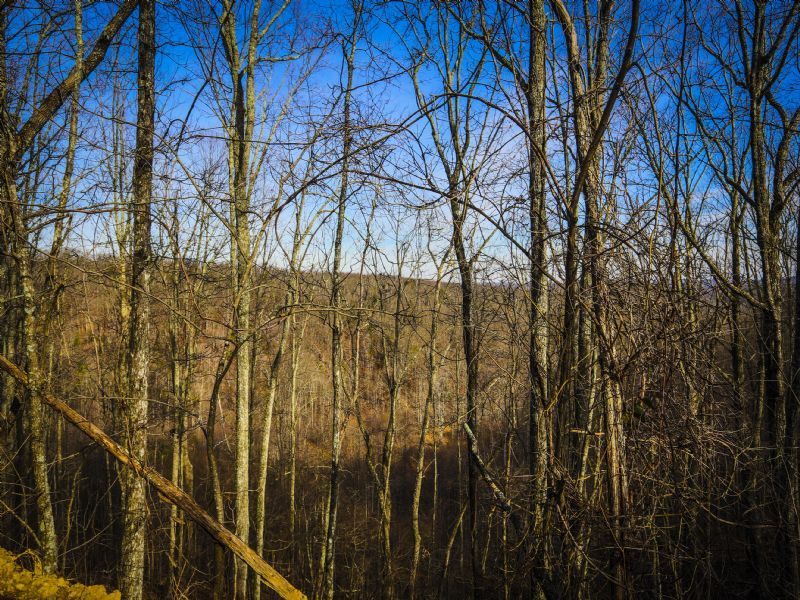 Bledsoe: Large Hunting Acreage : Spring City : Bledsoe County : Tennessee