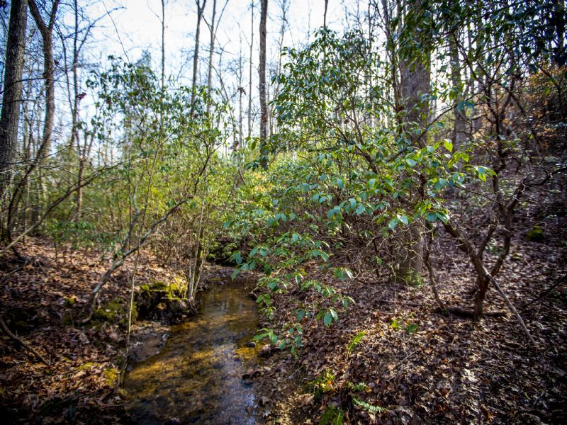 Mountain Creeks On Hunting Land : Spring City : Bledsoe County : Tennessee