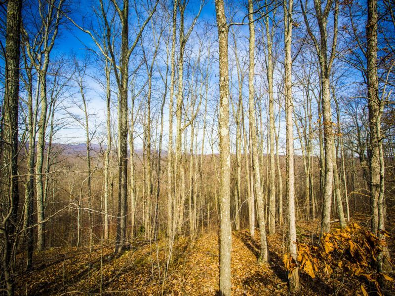 Bledsoe: Large Tract W/ Easy Access : Spring City : Bledsoe County : Tennessee