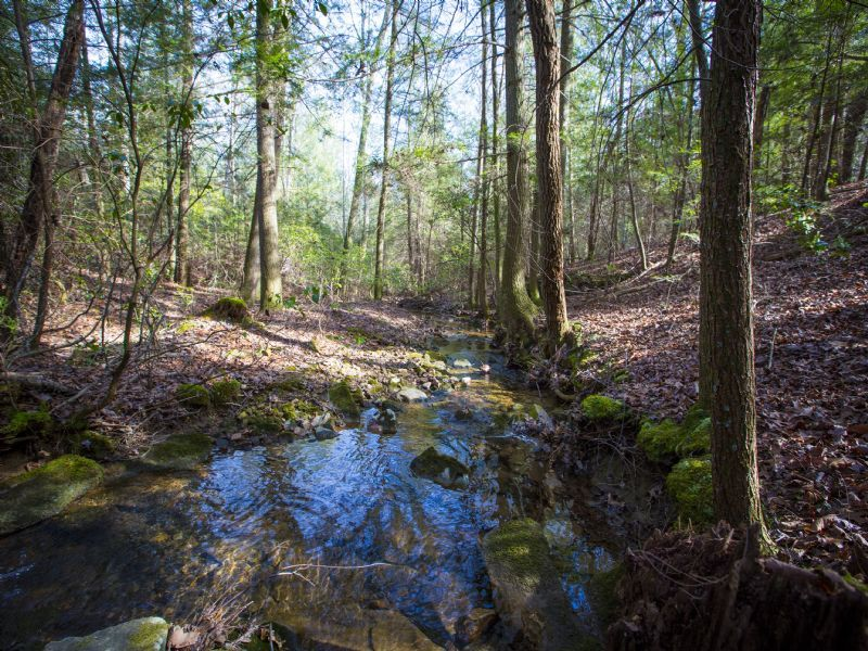 Creek Access On Private Land : Spring City : Bledsoe County : Tennessee