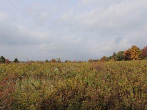 15 +/- Acres Of Land : Benton : Columbia County : Pennsylvania