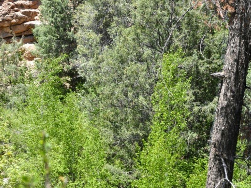 4,320 Deeded Acres- Elk Haven Ranch : Ramah : Cibola County : New Mexico