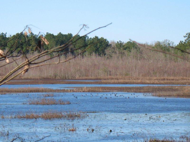 Myricks Mill Pond : Jeffersonville : Twiggs County : Georgia