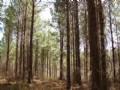 Pleasant Hunting, Timber, Homesite