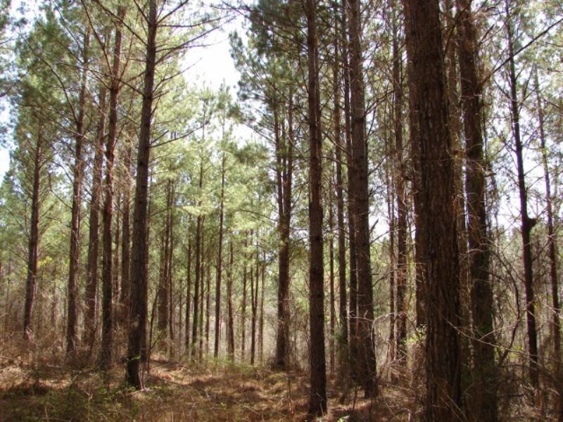 Pleasant Hunting, Timber, Homesite : Rockford : Coosa County : Alabama