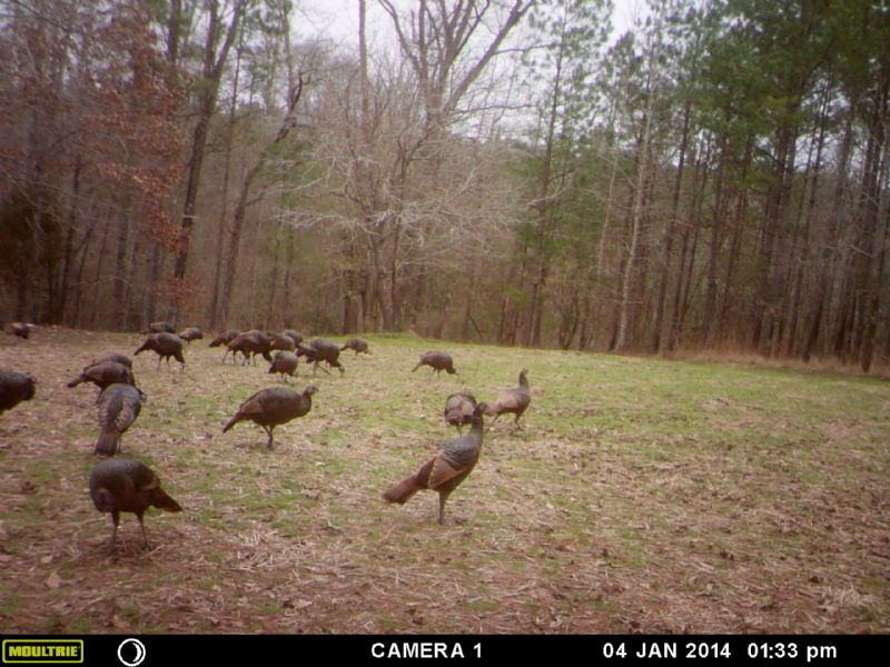 Hunting Heaven : Deepstep : Washington County : Georgia