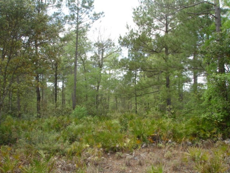Recreational / Private Homesite : Millwood : Ware County : Georgia