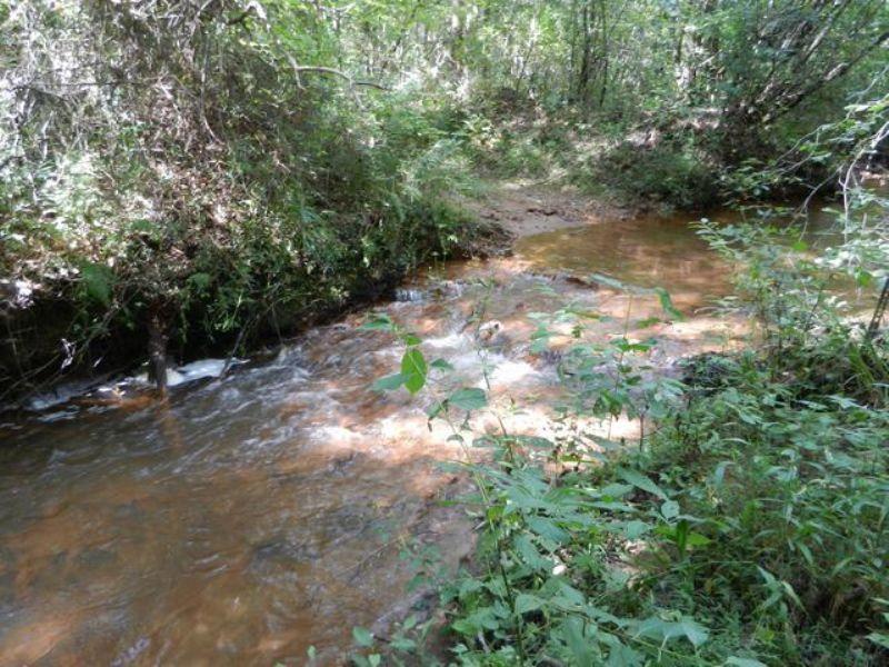 147+/- Acres Timberland : Ashland : Clay County : Alabama