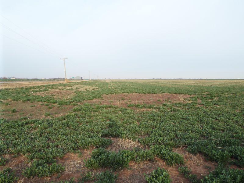 2,680± Acres Crop & Improved Grass : Burlington : Alfalfa County : Oklahoma