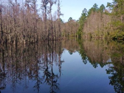 Gorgeous Cypress Pond On 25 Acres : Jesup : Wayne County : Georgia